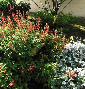 PollinatorPlants