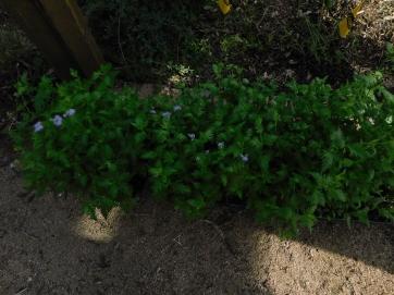 PollinatorPlants2 (1)